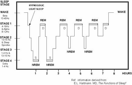 Rem Sleep Cycles