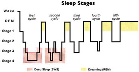What Stage Of Sleep Does Lucid Dreaming Occur